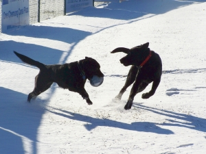 Emily and Stevie playing in the snow; photo by GAC