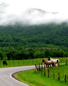 Horses, Mountains, Clouds
