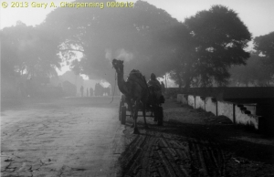 Camel Cart in the Mist; photo by GAC