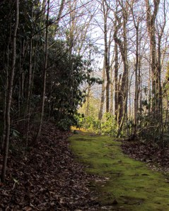 A Path in the Woods at the Community of the Cross; photo by GAC
